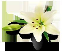 bg-flower